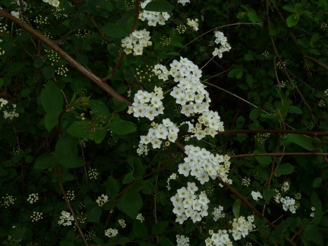 Mystery Plant - Any ideas?