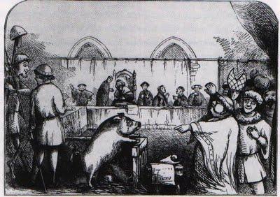 Trial of Pig